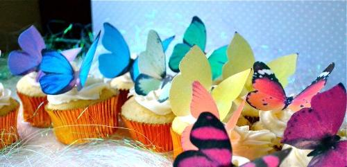 Rainbow Variety Set 12 - Cake